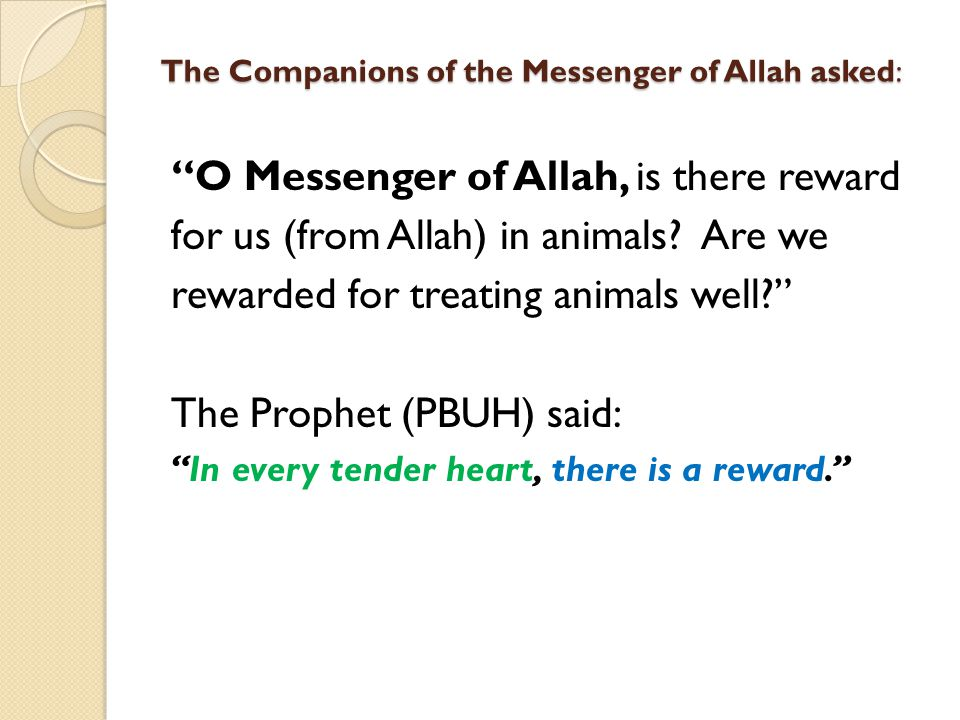 The Companions of the Messenger of Allah asked: O Messenger of Allah, is there reward for us (from Allah) in animals? Are we rewarded for treating ani