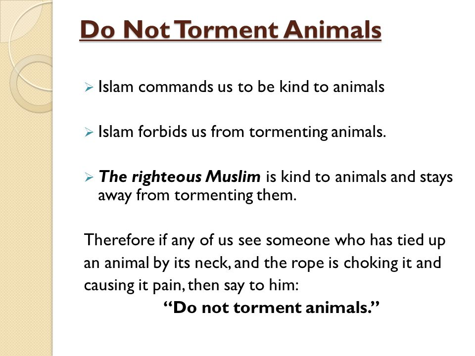 Do Not Torment Animals Islam commands us to be kind to animals Islam forbids us from tormenting animals. The righteous Muslim is kind to animals and s