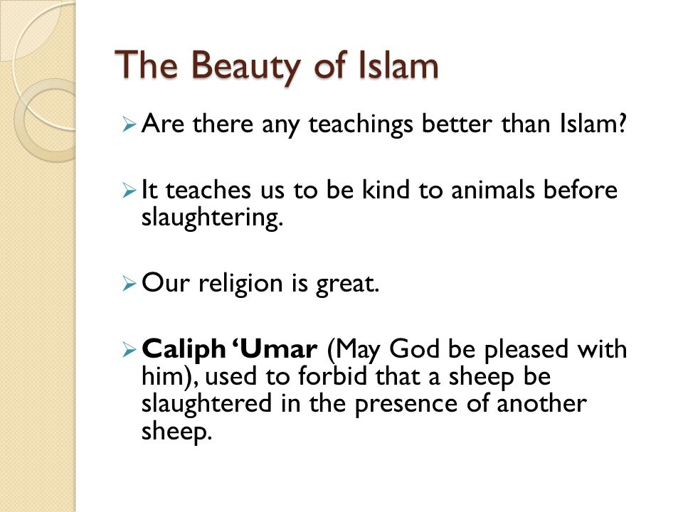 The Beauty of Islam Are there any teachings better than Islam? It teaches us to be kind to animals before slaughtering. Our religion is great. Caliph