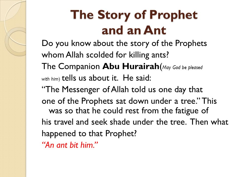 The Story of Prophet and an Ant Do you know about the story of the Prophets whom Allah scolded for killing ants? The Companion Abu Hurairah( May God b