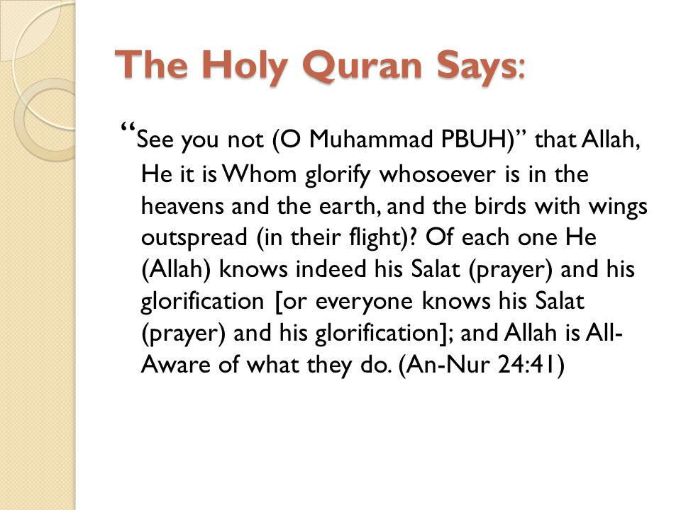 The Holy Quran Says: See you not (O Muhammad PBUH) that Allah, He it is Whom glorify whosoever is in the heavens and the earth, and the birds with win