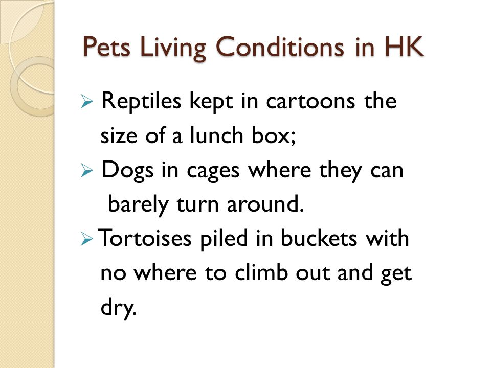 Pets Living Conditions in HK Reptiles kept in cartoons the size of a lunch box; Dogs in cages where they can barely turn around. Tortoises piled in bu