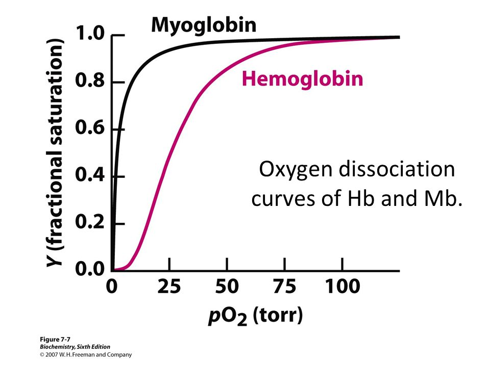 Oxygen dissociation curves of Hb and Mb.