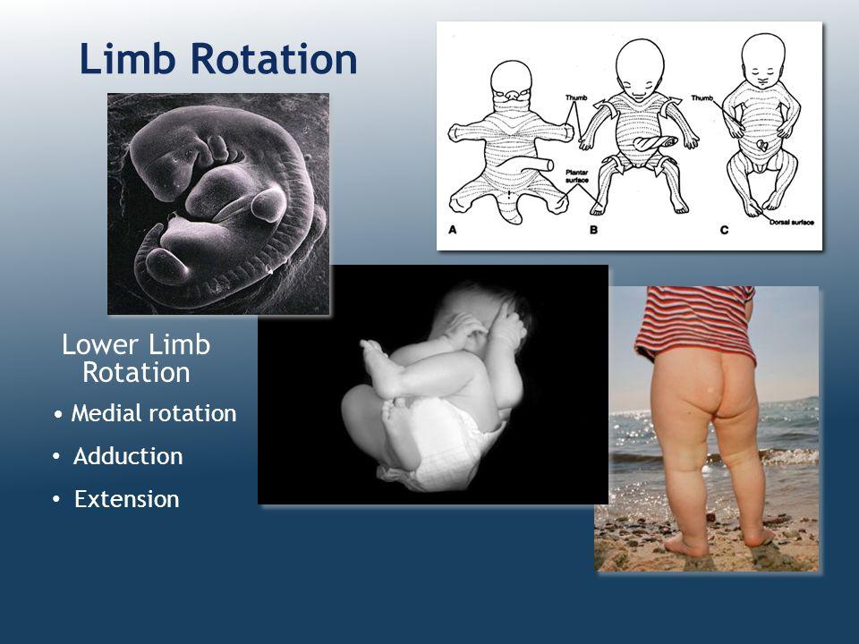 Limb Rotation Lower Limb Rotation Medial rotation Adduction Extension