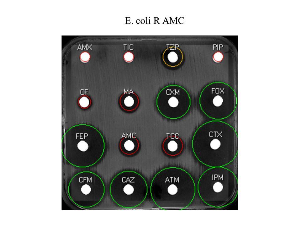 E. coli R AMC