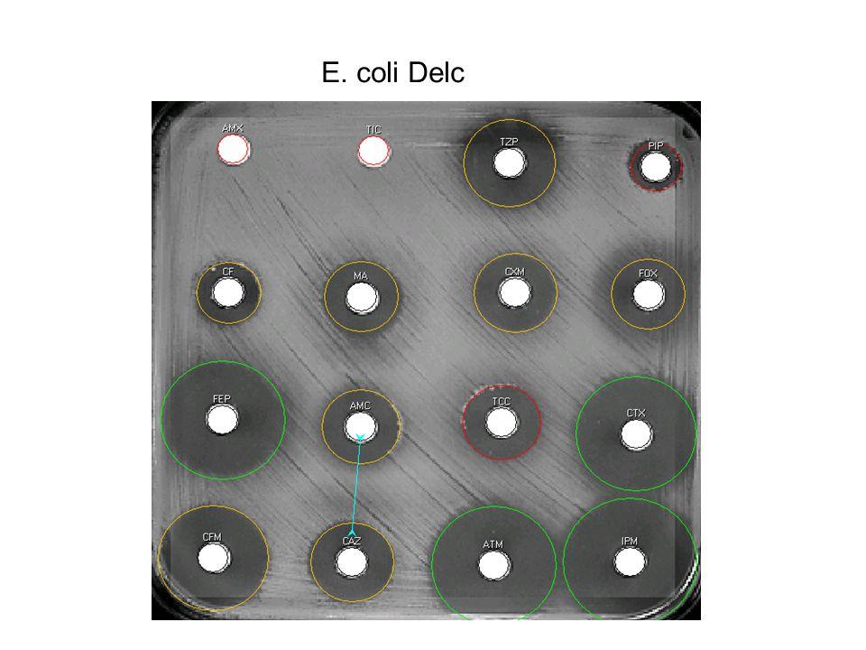 E. coli Delc