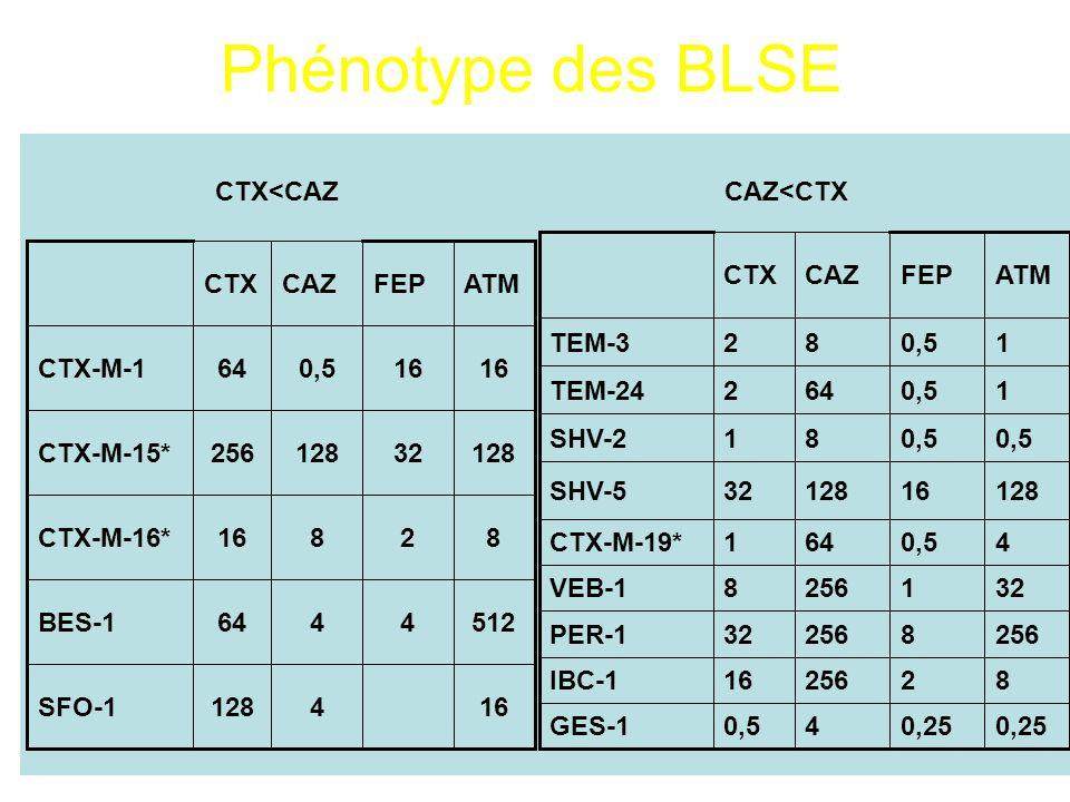 Phénotype des BLSE CTX<CAZCAZ<CTX 5124464BES-1 164128SFO-1 82816CTX-M-16* 12832128256CTX-M-15* 16 0,564CTX-M-1 ATMFEPCAZCTX 8225616IBC-1 2568 32PER-1 3212568VEB-1 40,5641CTX-M-19* 1281612832SHV-5 0,25 40,5GES-1 0,5 81SHV-2 10,5642TEM-24 10,582TEM-3 ATMFEPCAZCTX
