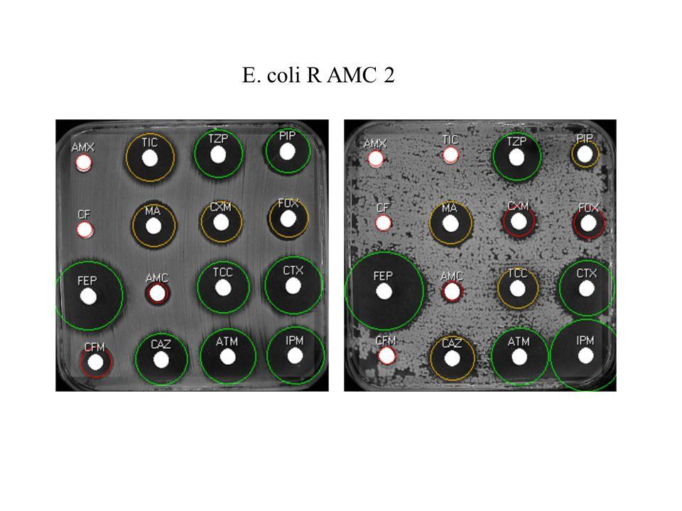 E. coli R AMC 2