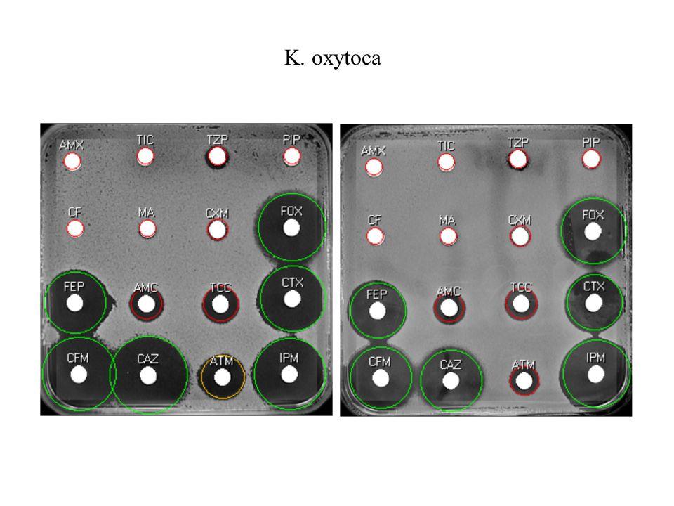 K. oxytoca