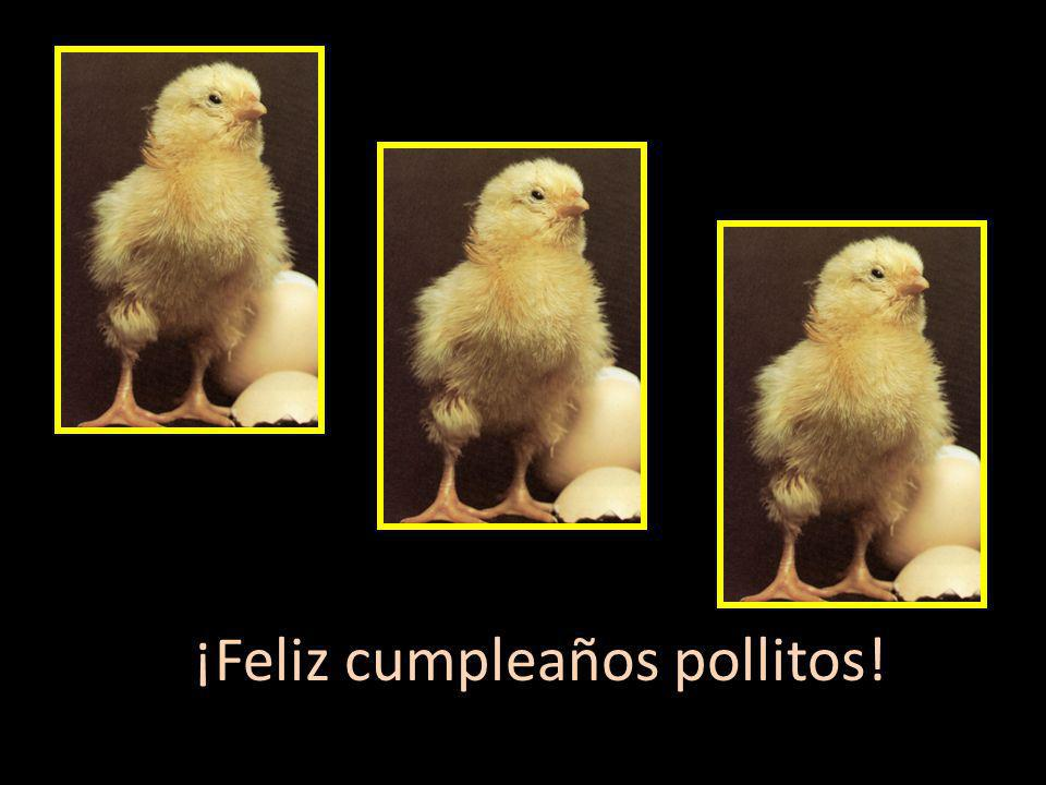 ¡Feliz cumpleaños pollitos! Happy Birthday baby chicks!