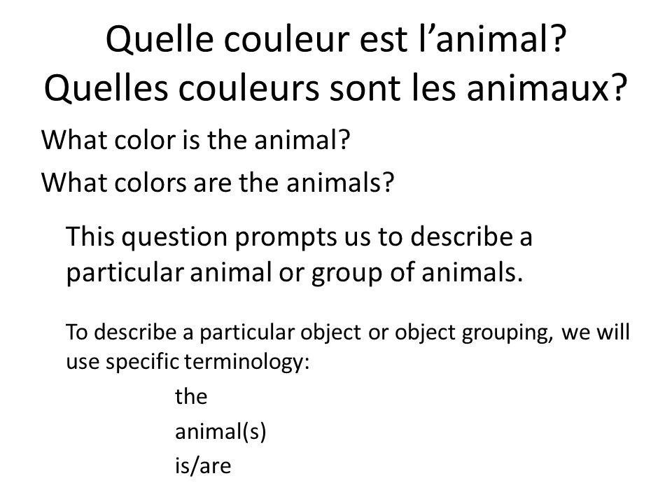 Quelle couleur est lanimal. Quelles couleurs sont les animaux.