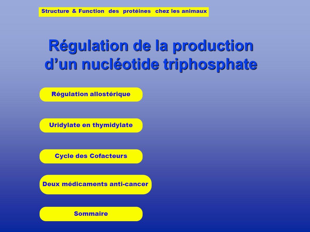 Régulation de la production dun nucléotide triphosphate Uridylate en thymidylate Cycle des Cofacteurs Deux médicaments anti-cancer Structure & Function des protéines chez les animaux Régulation allostérique Sommaire