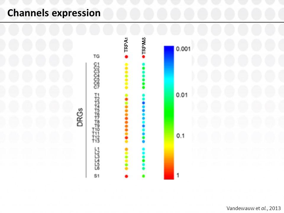 Vandewauw et al., 2013 Channels expression TRPA1 TRPM8