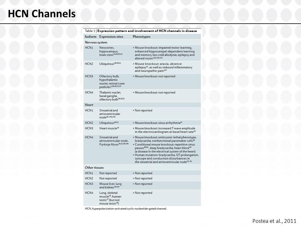 HCN Channels Postea et al., 2011