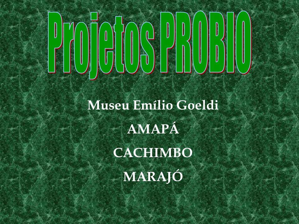 Museu Emílio Goeldi AMAPÁ CACHIMBO MARAJÓ
