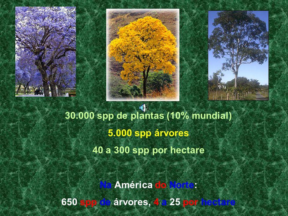 30.000 spp de plantas (10% mundial) 5.000 spp árvores 40 a 300 spp por hectare Na América do Norte: 650 spp de árvores, 4 a 25 por hectare
