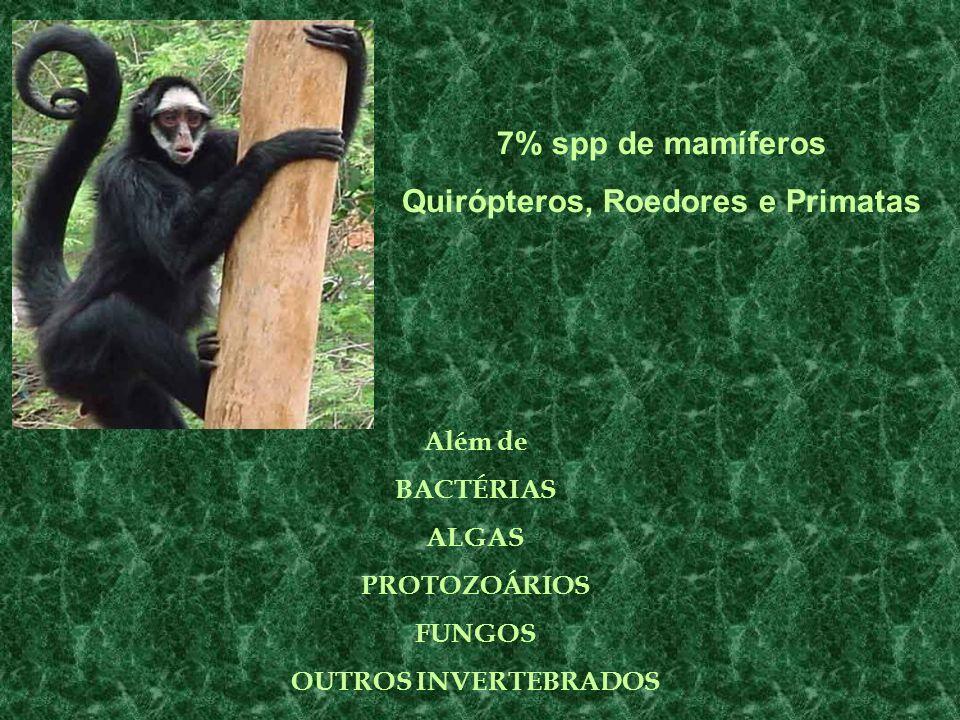 7% spp de mamíferos Quirópteros, Roedores e Primatas Além de BACTÉRIAS ALGAS PROTOZOÁRIOS FUNGOS OUTROS INVERTEBRADOS