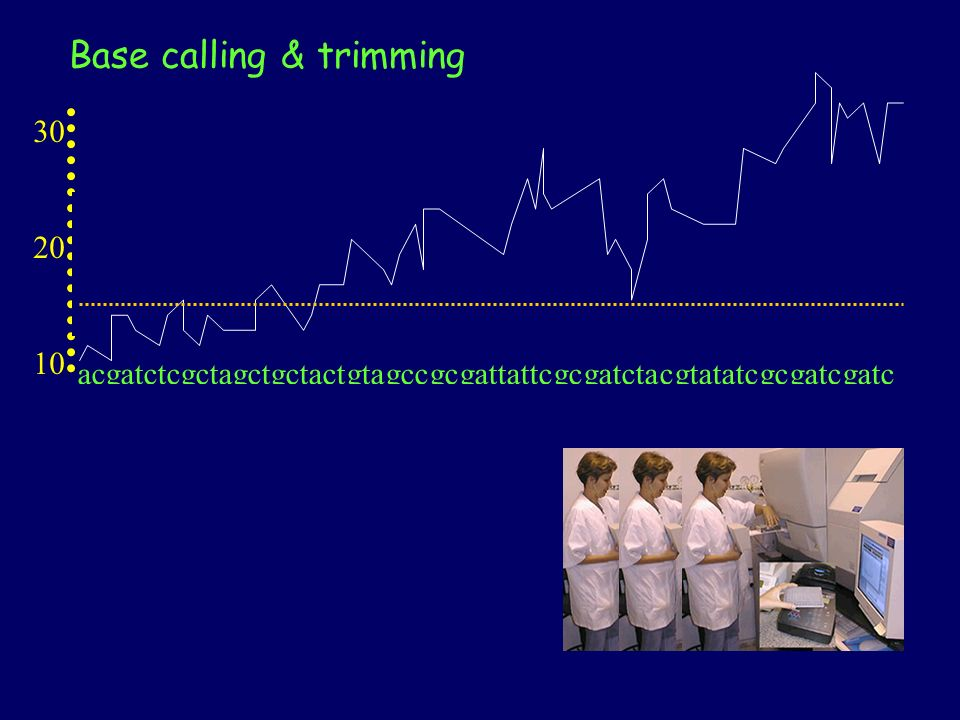 20 30 10 Random base calling at the beggining or the end of read (Phred < 10) Trimming (trim or trim_alt algorithms) Phred does the base calling chromatogram acgatctcgctagctgctactgtagccgcgattattcgcgatctacgtatatcgcgatcgatc Each base has assigned a chance of failure 1% = 0,01 = 10 -2 = Phred 20 Base calling & trimming
