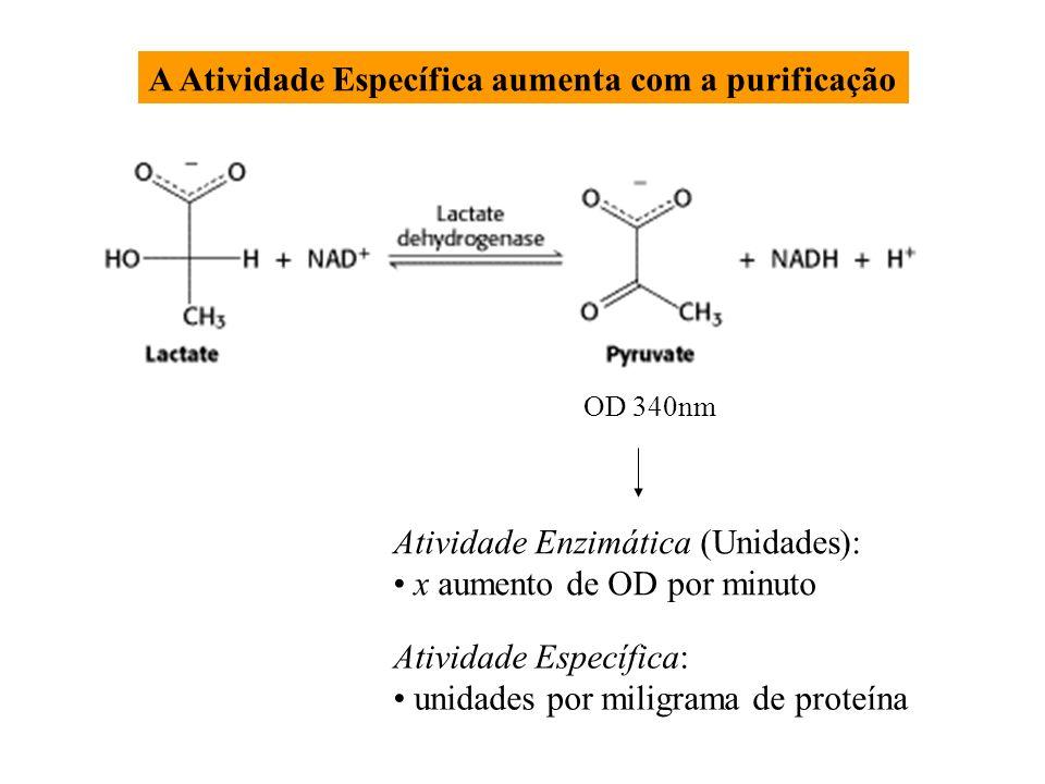 OD 340nm Atividade Enzimática (Unidades): x aumento de OD por minuto Atividade Específica: unidades por miligrama de proteína A Atividade Específica a
