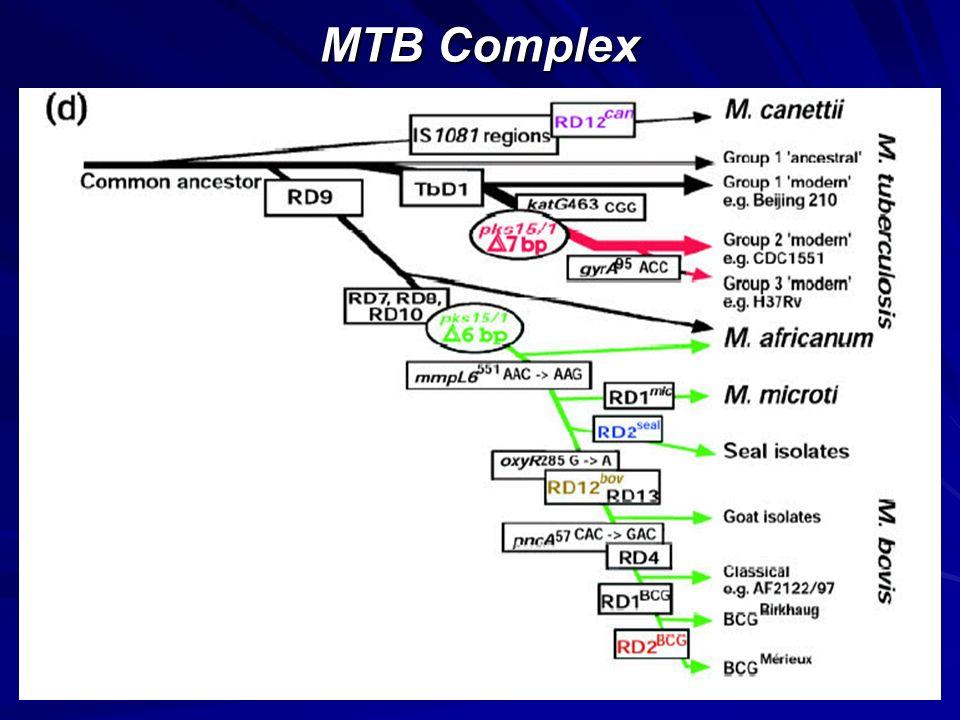 MTB Complex