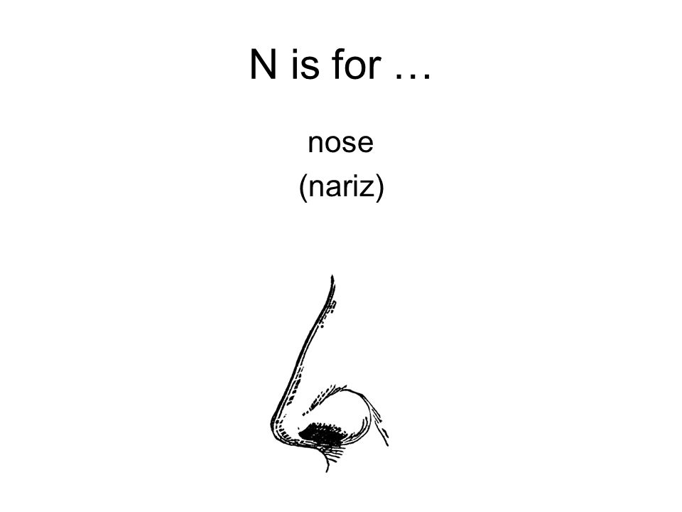 N is for … nose (nariz)