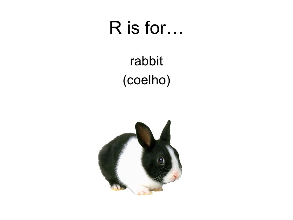 R is for… rabbit (coelho)