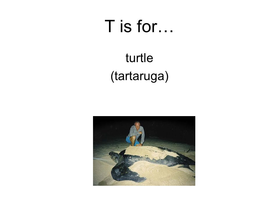 T is for… turtle (tartaruga)