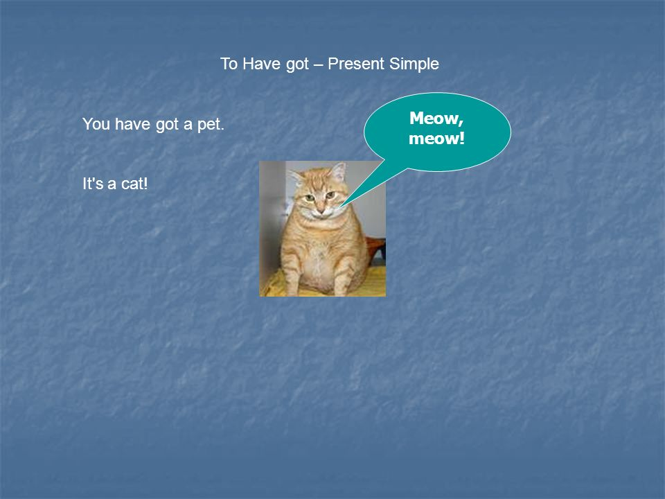 ENGLISH – 5th Pets Verb TO HAVE GOT – Present Simple Vocabulary