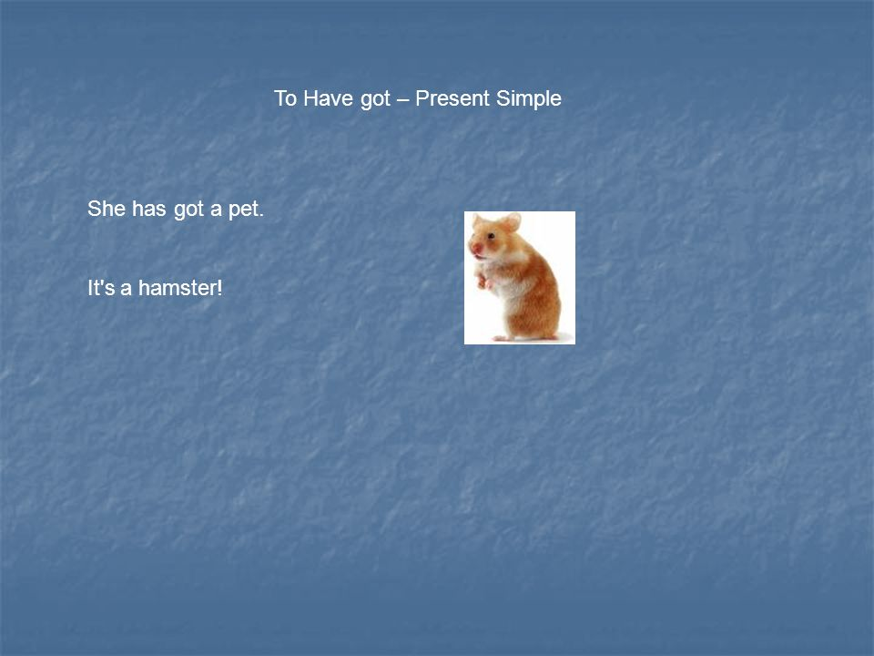 To Have got – Present Simple She has got a pet. It s a hamster!