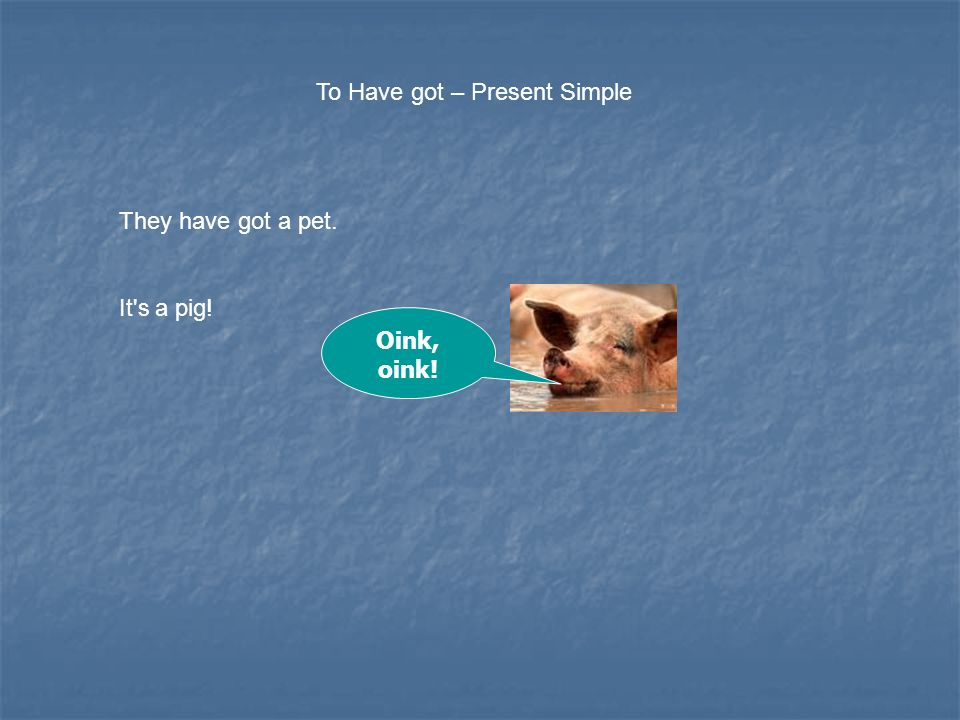 To Have got – Present Simple They have got a pet. It s a pig! Oink, oink!