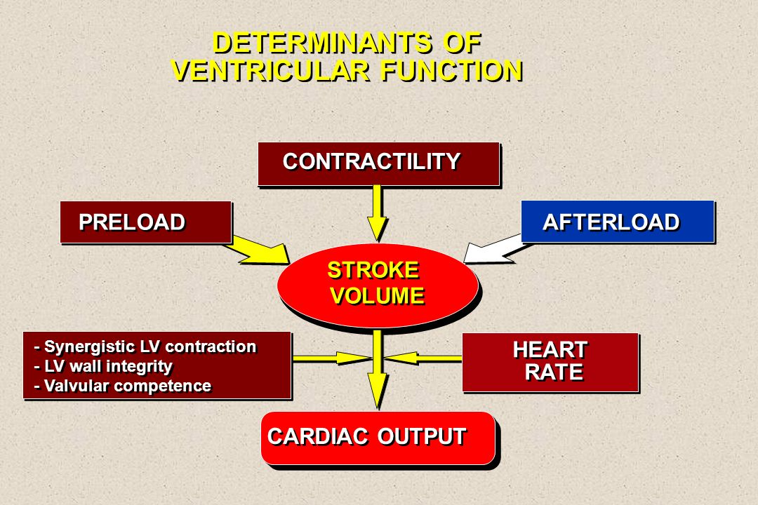 DETERMINANTS OF VENTRICULAR FUNCTION DETERMINANTS OF VENTRICULAR FUNCTION STROKE VOLUME PRELOAD CONTRACTILITY CARDIAC OUTPUT HEART RATE - Synergistic