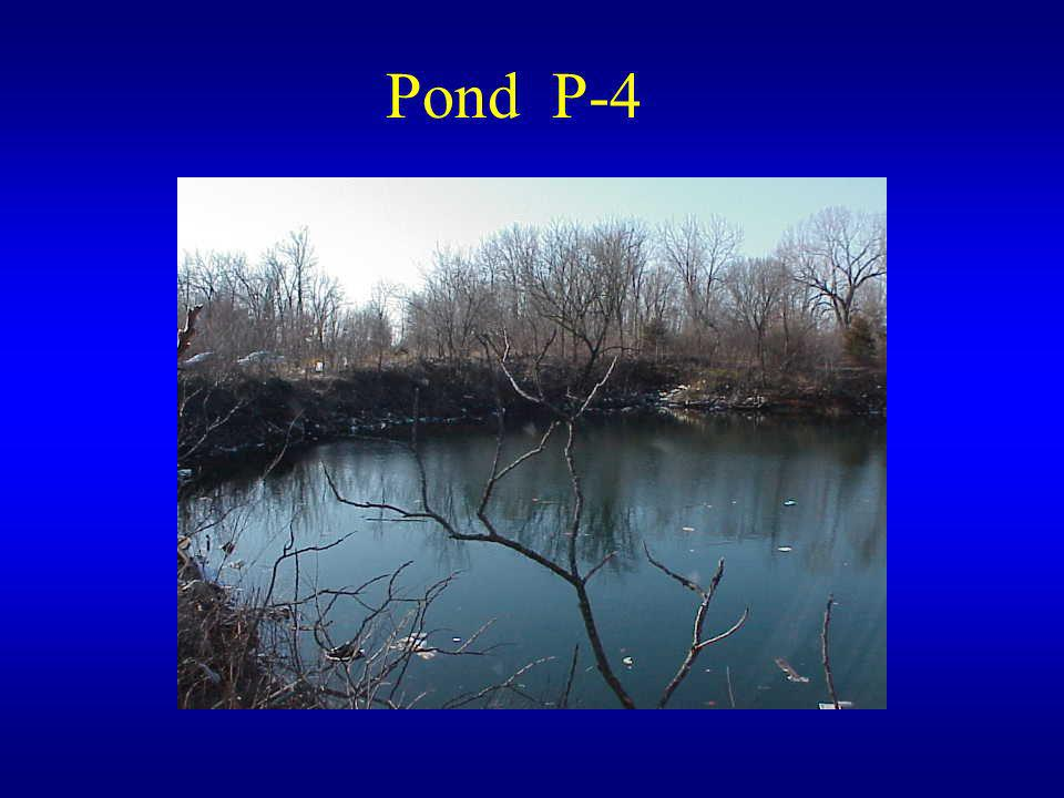Pond P-4