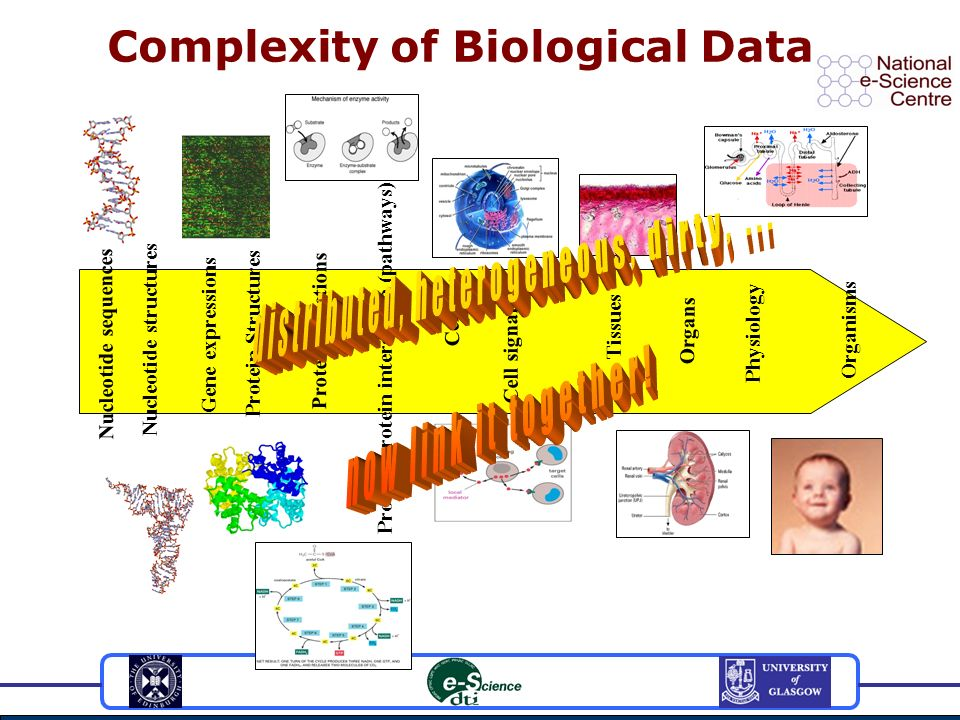 Complexity of Biological Data Nucleotide sequences Nucleotide structures Gene expressions Protein Structures Protein functions Protein-protein interaction (pathways) Cell Cell signalling Tissues Organs Physiology Organisms