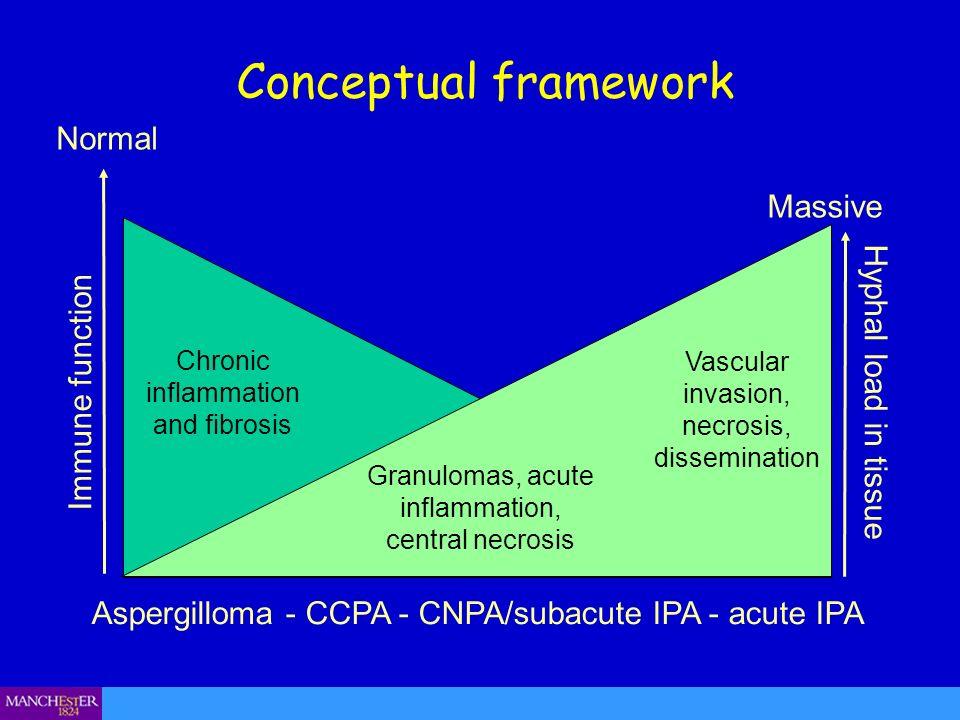 Conceptual framework Aspergilloma - CCPA - CNPA/subacute IPA - acute IPA Immune function Hyphal load in tissue Normal Massive Vascular invasion, necrosis, dissemination Granulomas, acute inflammation, central necrosis Chronic inflammation and fibrosis