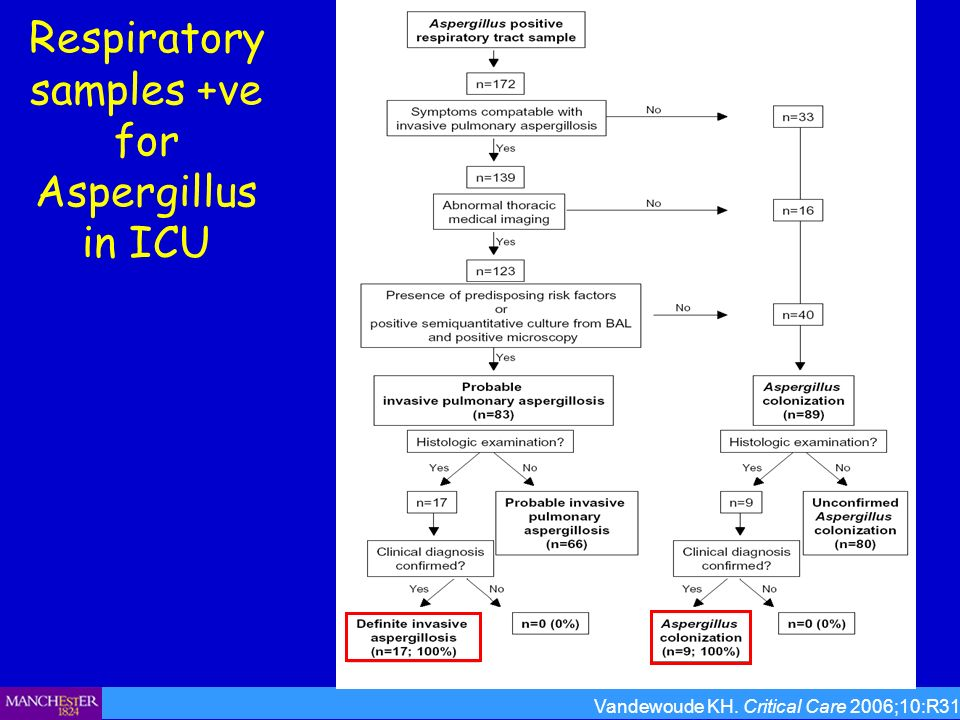 Respiratory samples +ve for Aspergillus in ICU Vandewoude KH. Critical Care 2006;10:R31