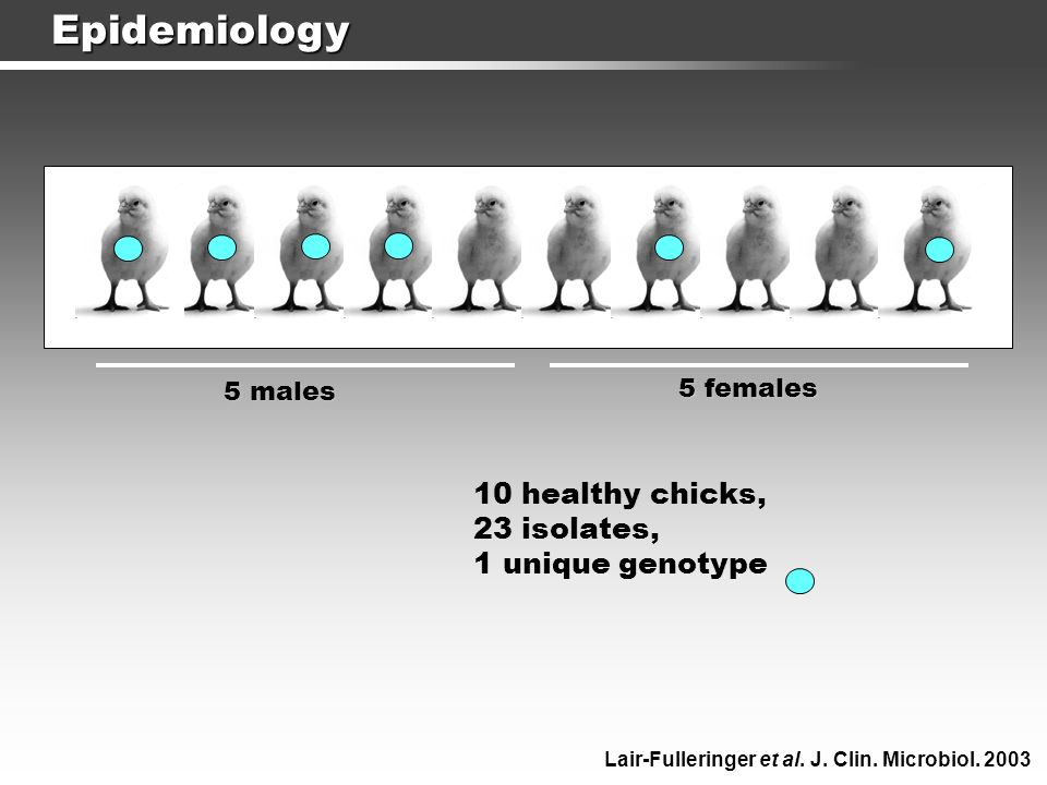 Epidemiology 5 males 5 females 10 healthy chicks, 23 isolates, 1 unique genotype Lair-Fulleringer et al. J. Clin. Microbiol. 2003