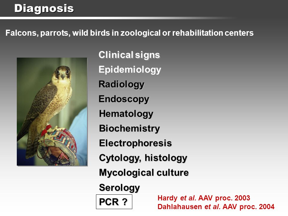 Serology Hematology Diagnosis Clinical signs Epidemiology Radiology Endoscopy Falcons, parrots, wild birds in zoological or rehabilitation centers Bio