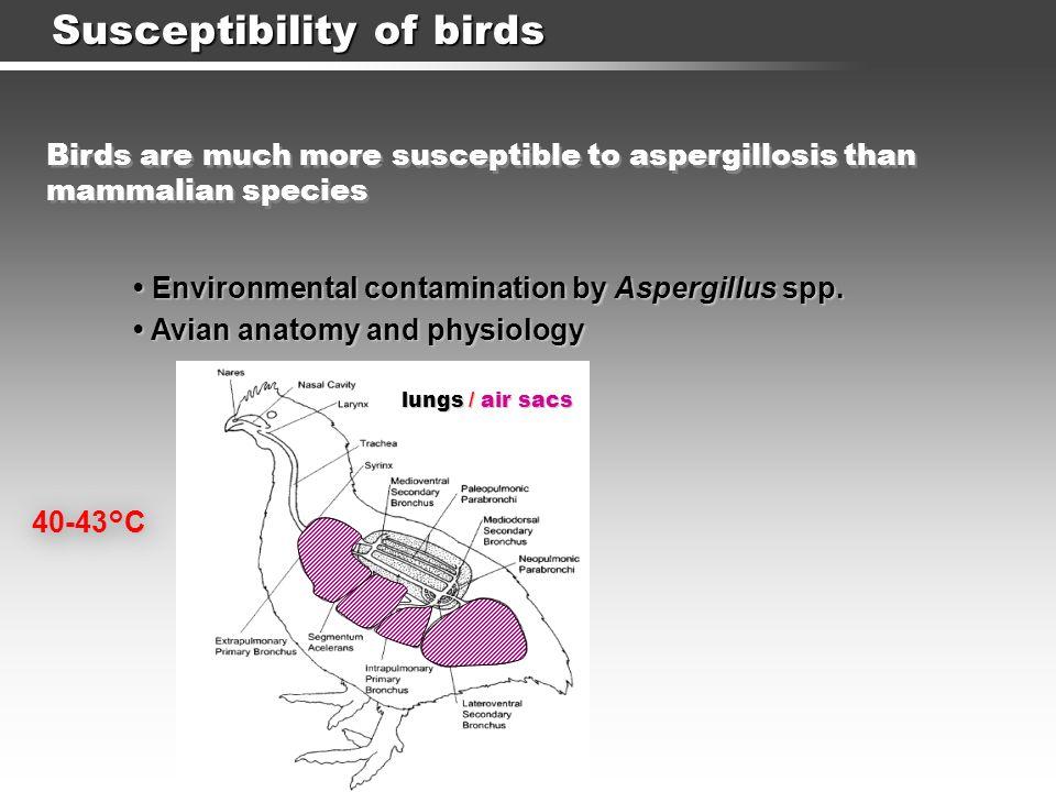 Susceptibility of birds Environmental contamination by Aspergillus spp.