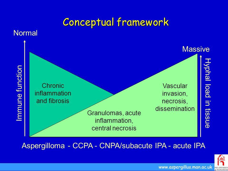 Conceptual framework Conceptual framework www.aspergillus.man.ac.uk Aspergilloma - CCPA - CNPA/subacute IPA - acute IPA Immune function Hyphal load in