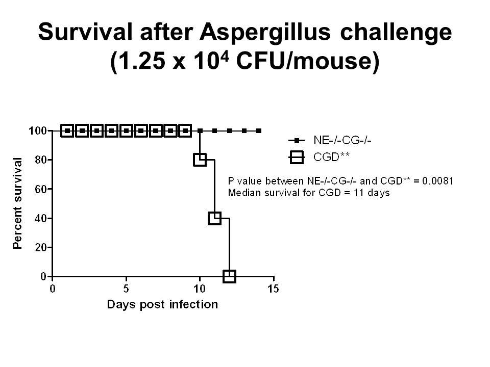 Survival after Aspergillus challenge (1.25 x 10 4 CFU/mouse)