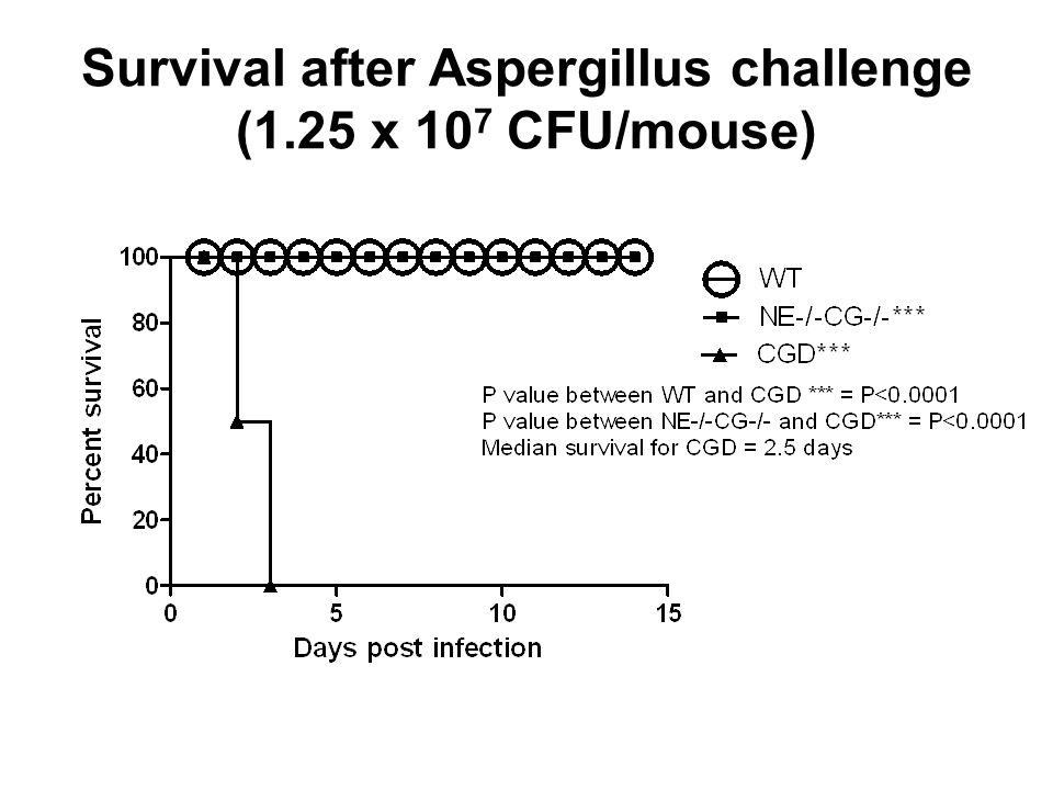 Survival after Aspergillus challenge (1.25 x 10 7 CFU/mouse)