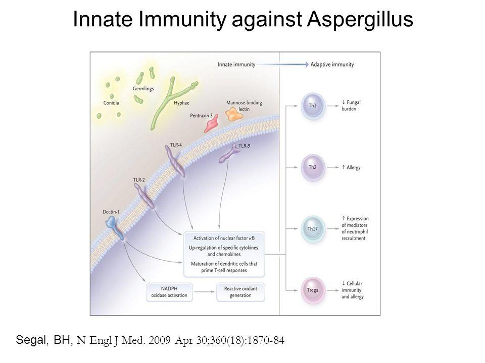 Innate Immunity against Aspergillus Segal, BH, N Engl J Med. 2009 Apr 30;360(18):1870-84