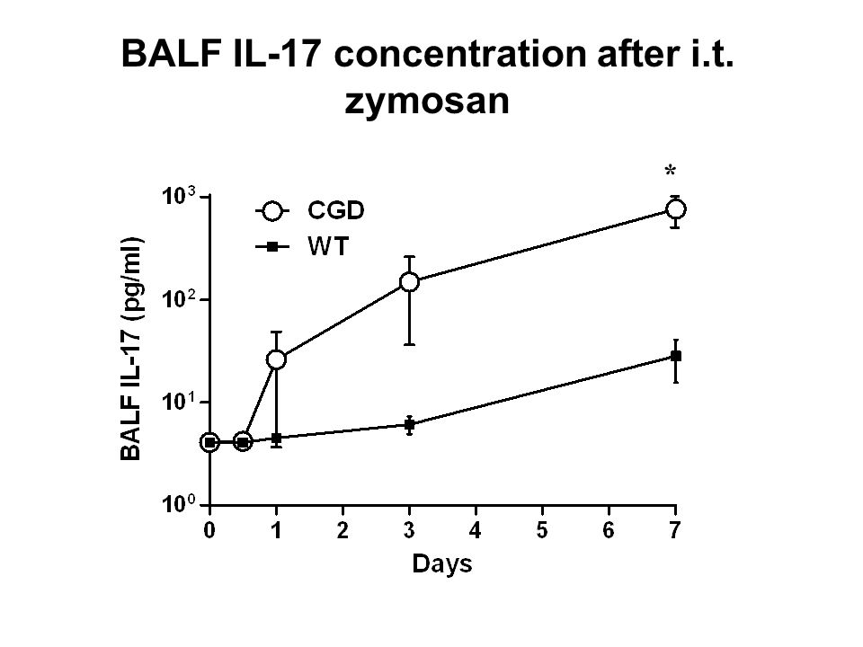 BALF IL-17 concentration after i.t. zymosan *