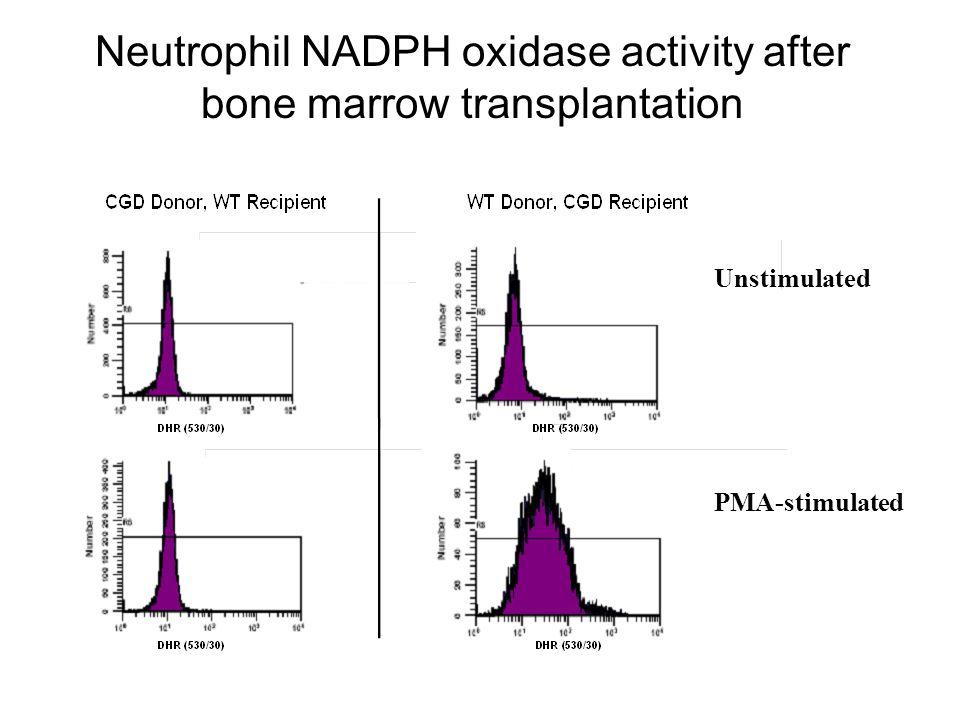 Unstimulated PMA-stimulated Neutrophil NADPH oxidase activity after bone marrow transplantation