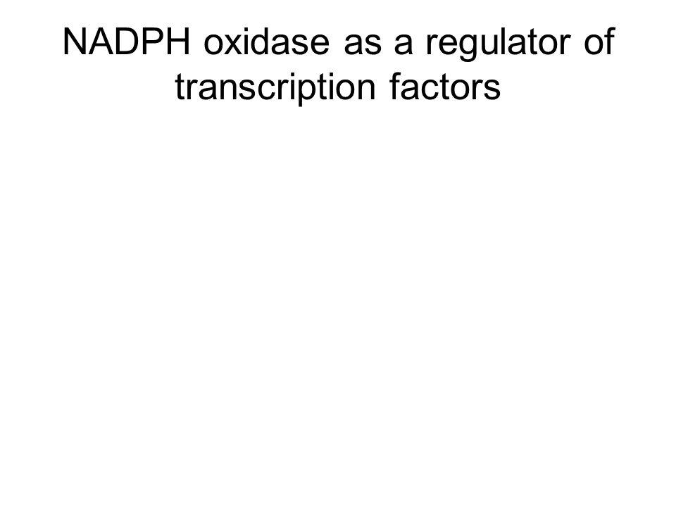 NADPH oxidase as a regulator of transcription factors