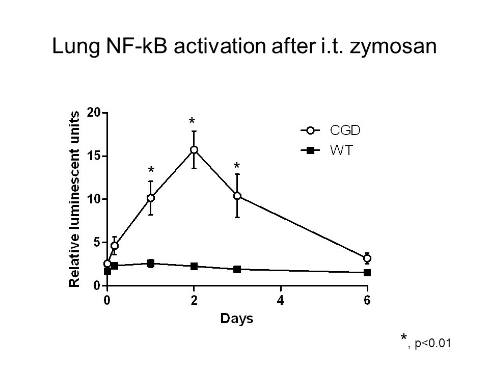 Lung NF-kB activation after i.t. zymosan * * * *, p<0.01