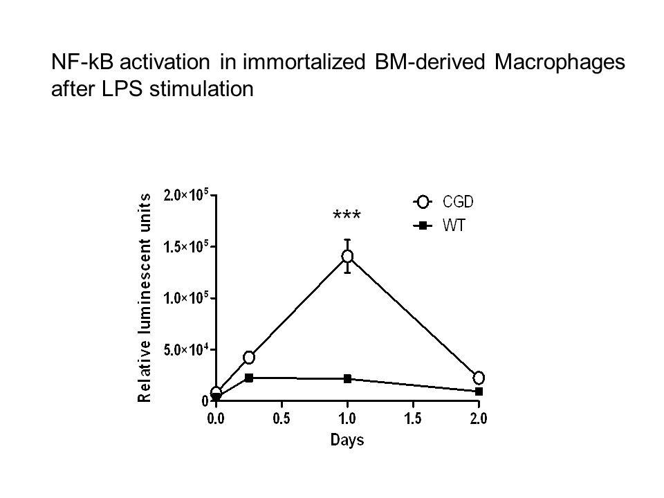 NF-kB activation in immortalized BM-derived Macrophages after LPS stimulation