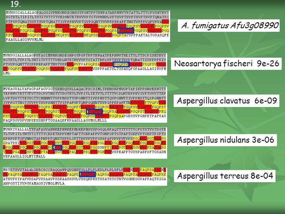 A. fumigatus Afu3g08990 Neosartorya fischeri 9e-26 Aspergillus clavatus 6e-09 Aspergillus nidulans 3e-06 Aspergillus terreus 8e-04 19.
