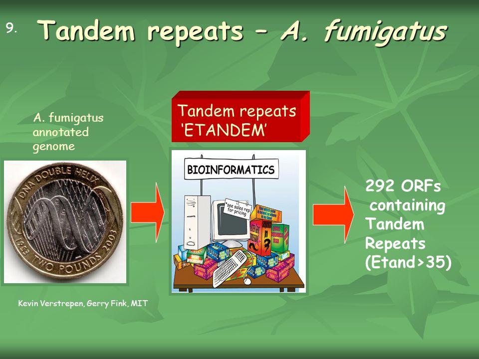 Tandem repeats – A.
