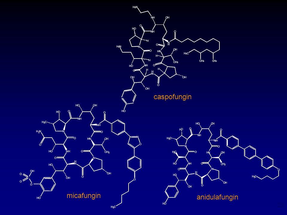 23 anidulafungin N O NH O HO HO NH O OH H N H 2 N OH H 2 N O OH HN OH HO H H H H NH O H CH 3 OH O N H O H 3 C CH 3 CH 3 caspofungin HO O NH O HO OH H